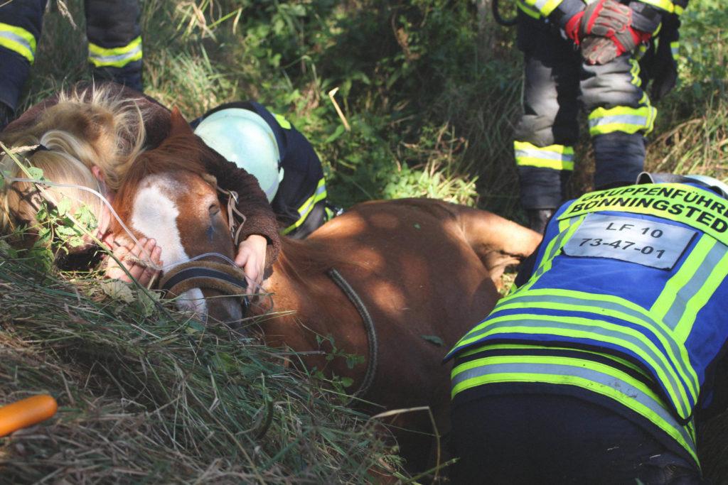 Tierrettung: Ein Pferd konnte sich nicht mehr aus einem Graben befreien.