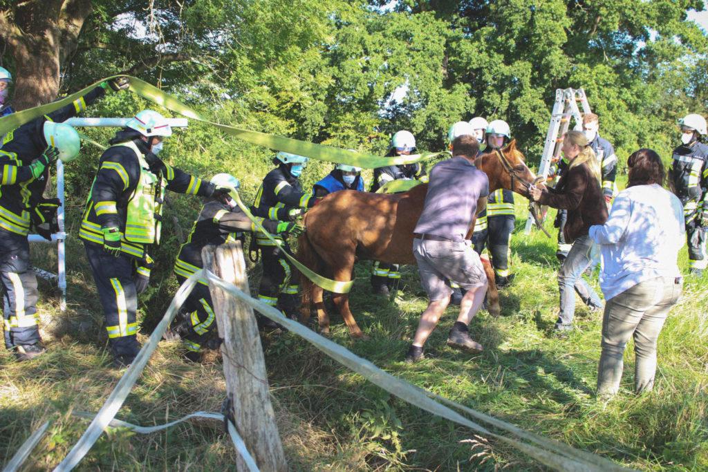 Tierrettung: Das Pferd konnte erfolgreich aus dem Graben gehoben werden.